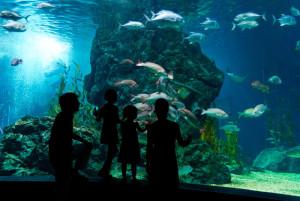 8 chicago-shedd-aquarium