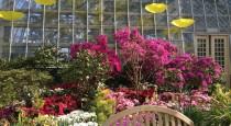 6 Garfield Park Conservatory