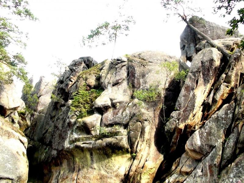 Сонний лев Фото: KатюшаGO