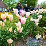 """""""Час тюльпанів"""" – найкращий фестиваль квітів у США"""