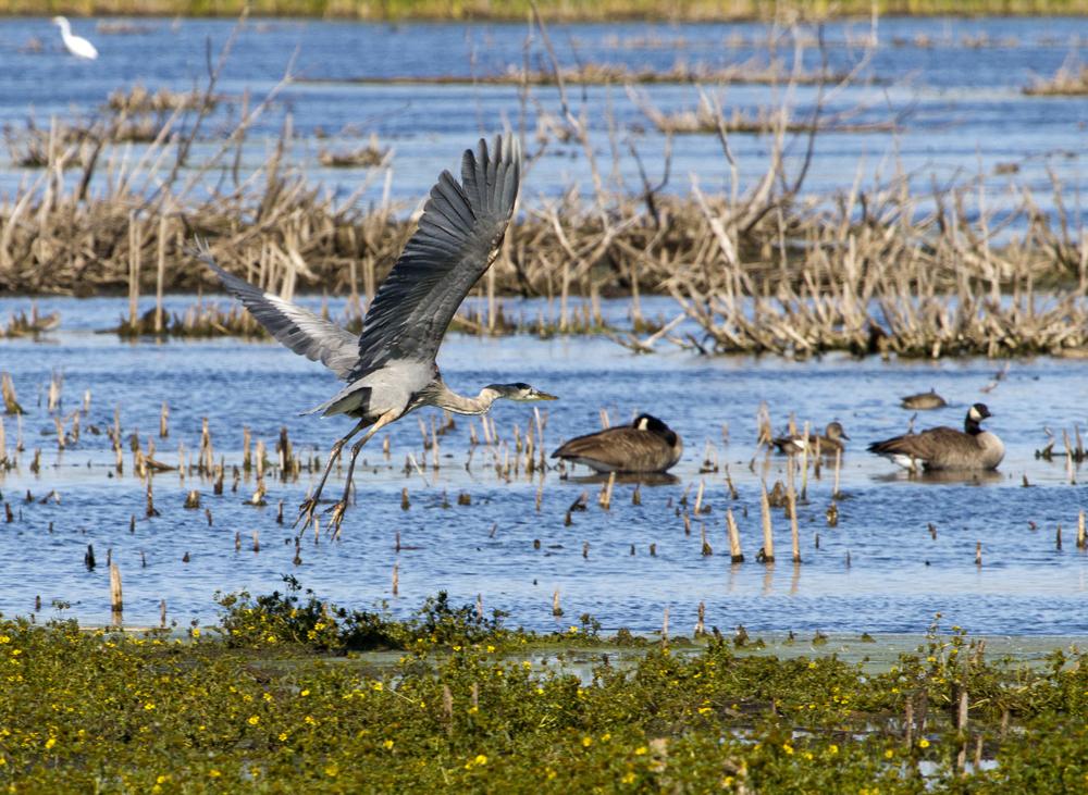 Horicon Marsh Refuge