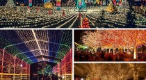 6 Lincoln-Park-Zoo-Lights