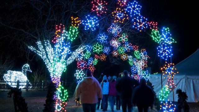5 wild-lights