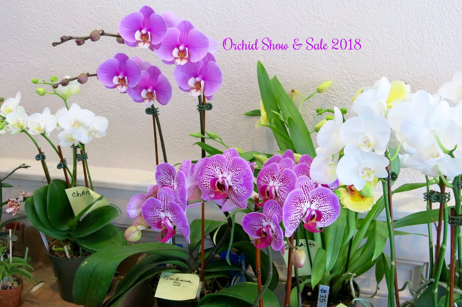 Orchids_group